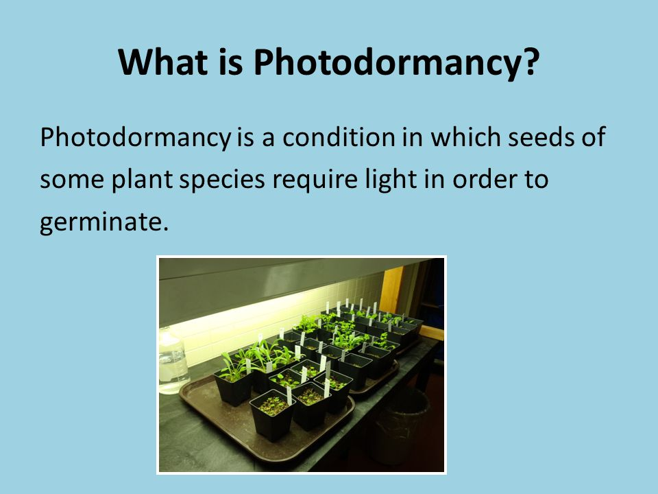 What is Photodormancy? Photodormancy is a condition in which seeds of some plant species require light in order to germinate.