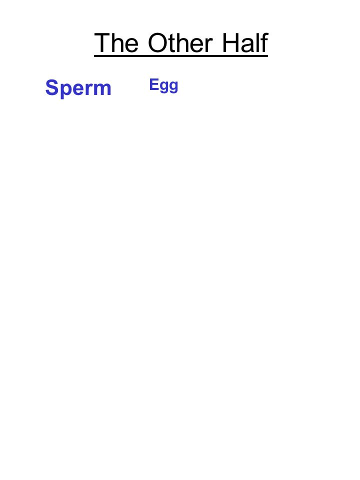 The Other Half Egg Sperm