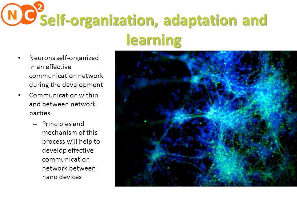 Self-organization, adaptation and learning Neurons self-organized in an effective communication network during the development Communication within and between network parties – Principles and mechanism of this process will help to develop effective communication network between nano devices