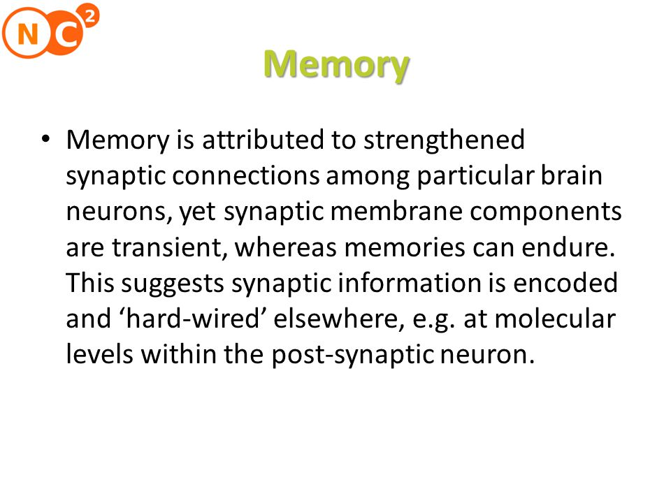 Memory Memory is attributed to strengthened synaptic connections among particular brain neurons, yet synaptic membrane components are transient, whereas memories can endure.
