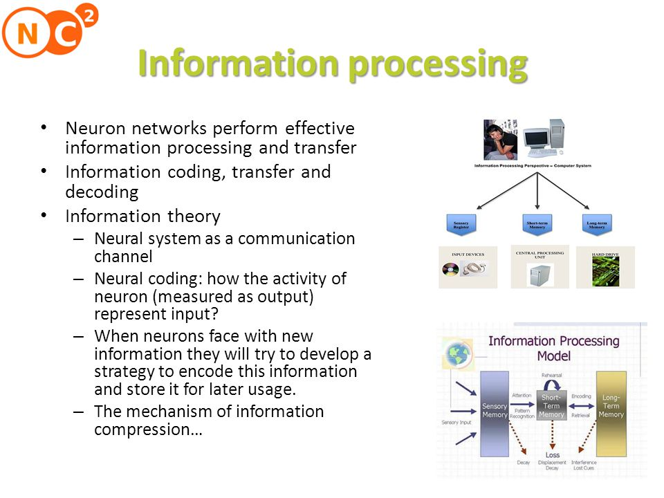 Sensory information processing performed on many levels Information processing