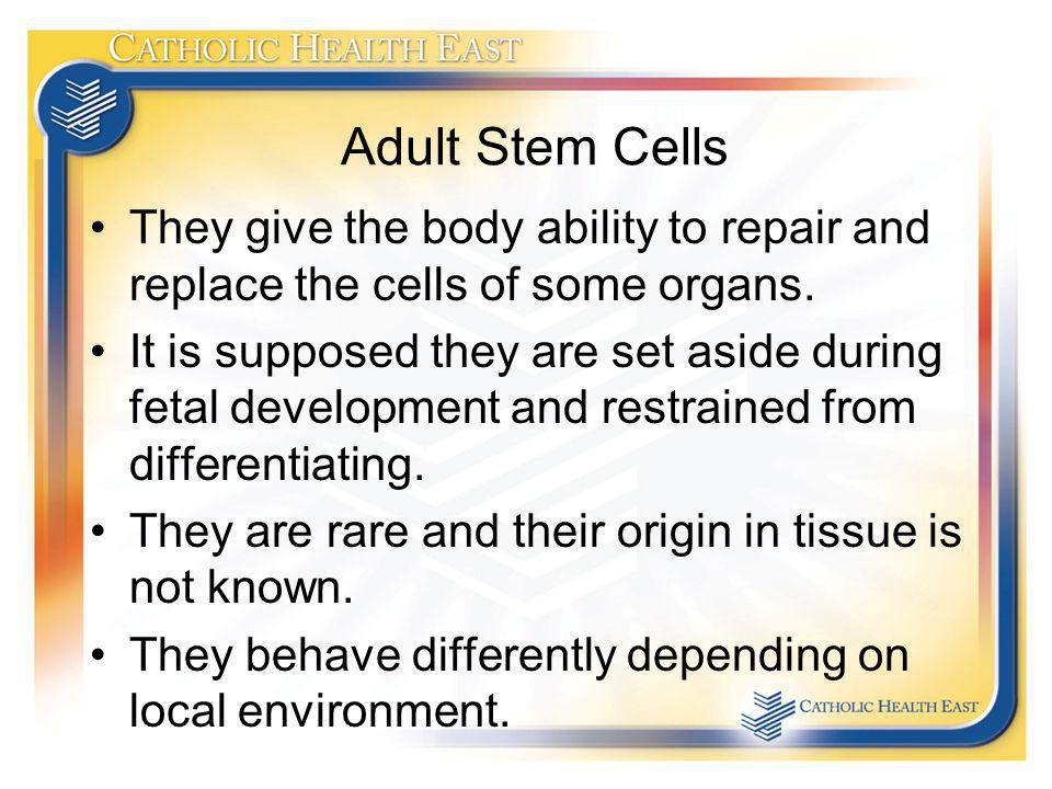 Adult Stem Cells They give the body ability to repair and replace the cells of some organs. It is supposed they are set aside during fetal development