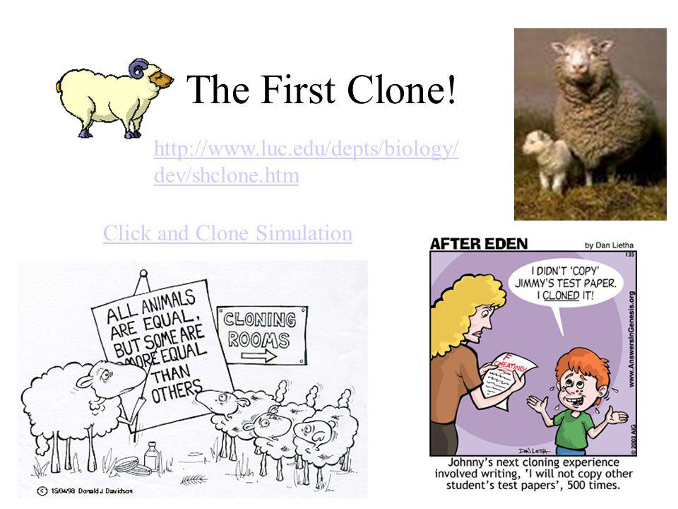 The First Clone! http://www.luc.edu/depts/biology/ dev/shclone.htm Click and Clone Simulation