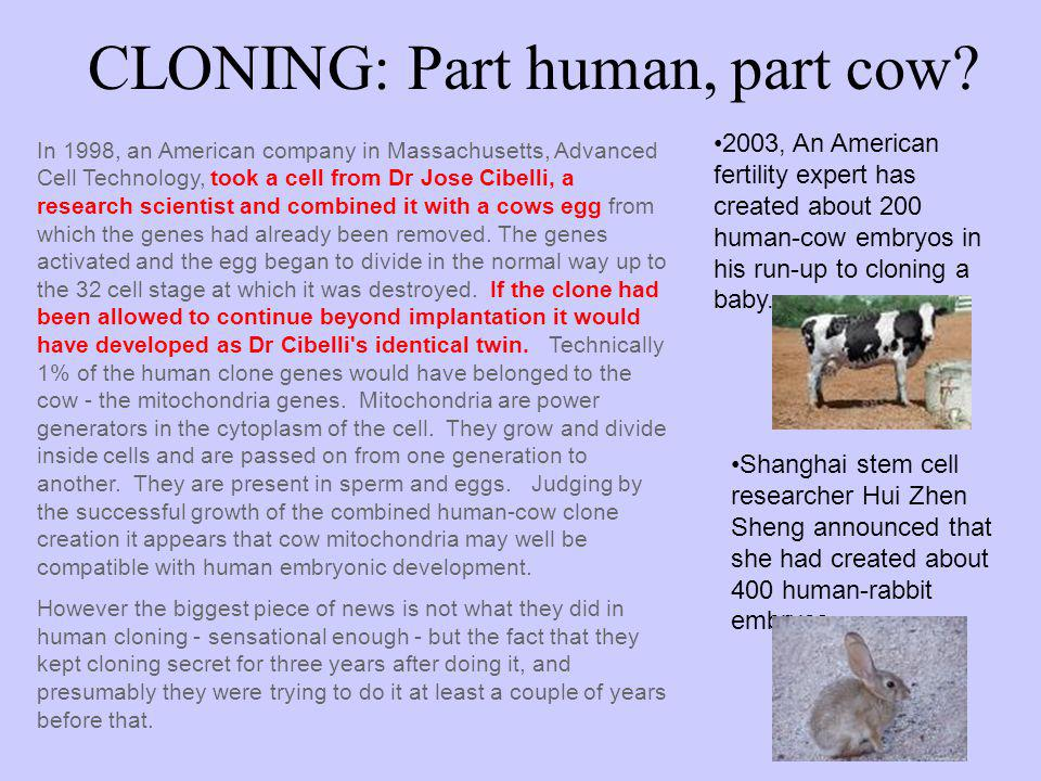 CLONING: Part human, part cow? In 1998, an American company in Massachusetts, Advanced Cell Technology, took a cell from Dr Jose Cibelli, a research s