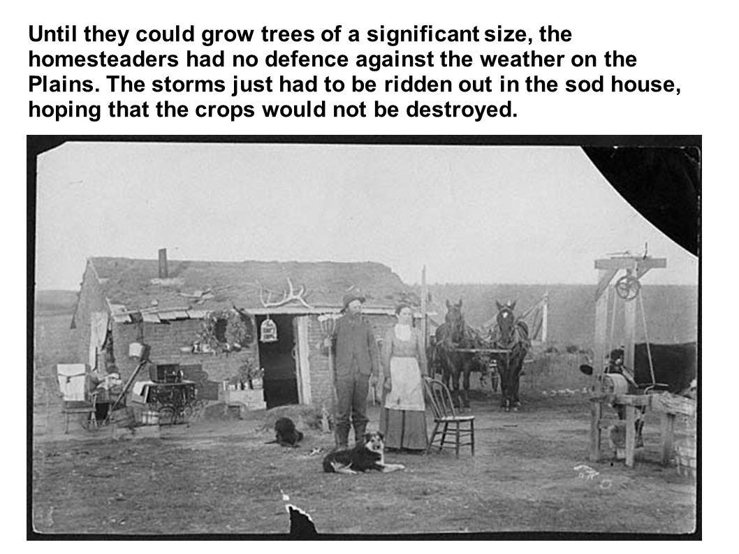 Until they could grow trees of a significant size, the homesteaders had no defence against the weather on the Plains. The storms just had to be ridden