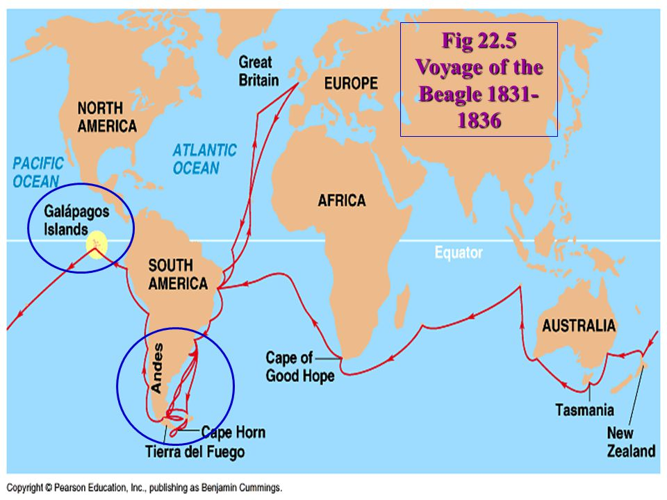 Fig 22.5 Voyage of the Beagle 1831- 1836