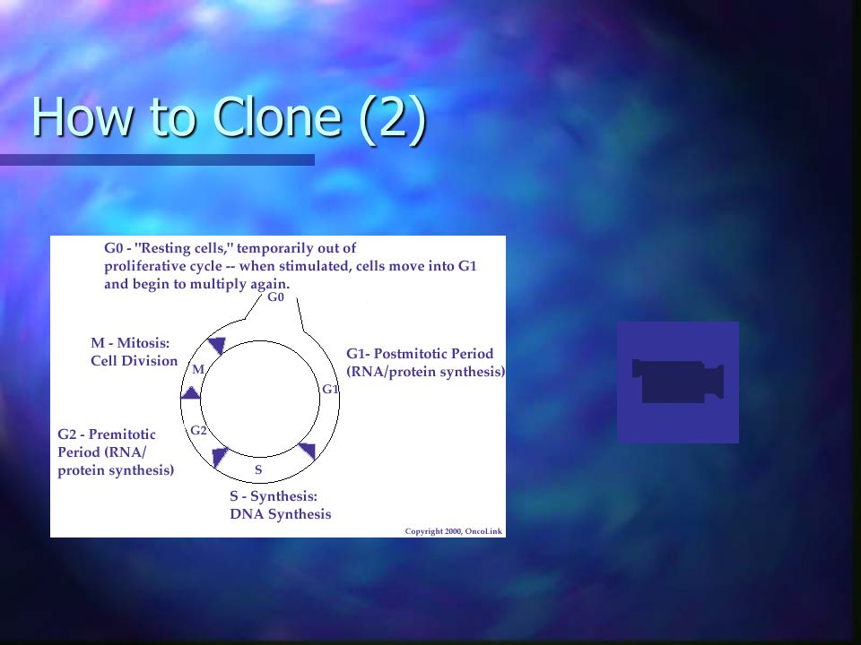 How to Clone (2)