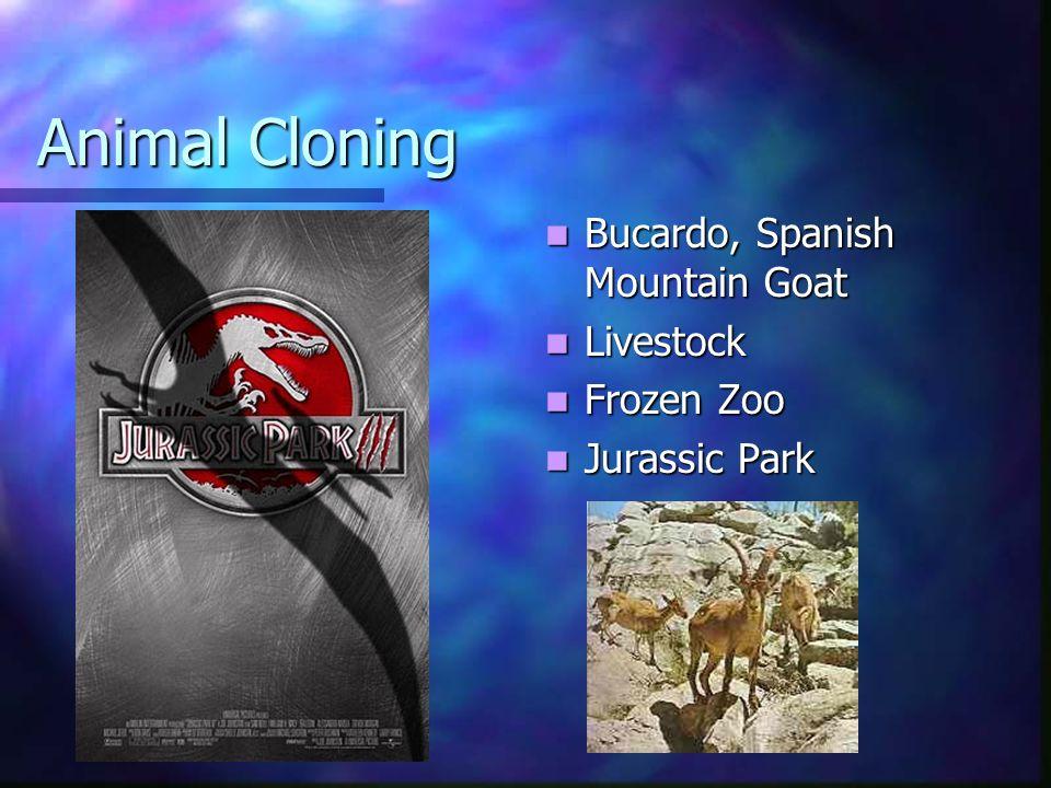 Animal Cloning Bucardo, Spanish Mountain Goat Bucardo, Spanish Mountain Goat Livestock Livestock Frozen Zoo Frozen Zoo Jurassic Park Jurassic Park
