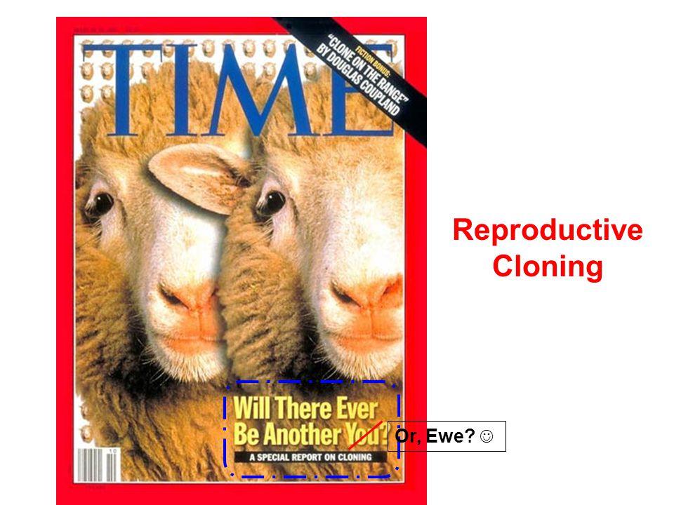 Reproductive Cloning Or, Ewe