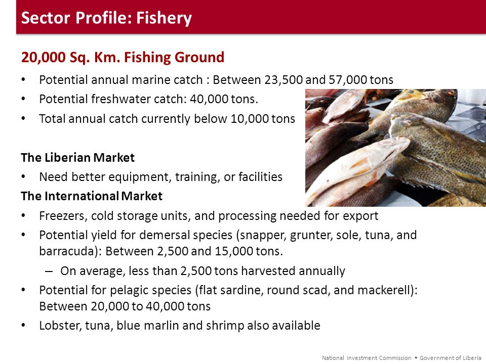 Sector Profile: Fishery 20,000 Sq. Km. Fishing Ground Potential annual marine catch : Between 23,500 and 57,000 tons Potential freshwater catch: 40,00