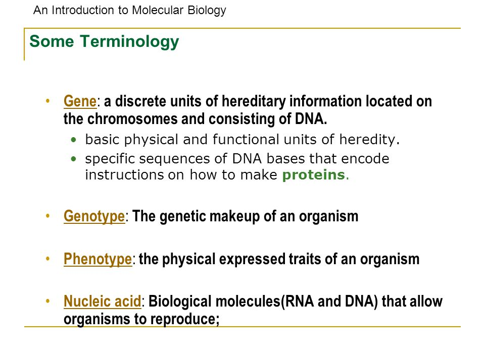 An Introduction to Molecular Biology Some Terminology Gene : a discrete units of hereditary information located on the chromosomes and consisting of D