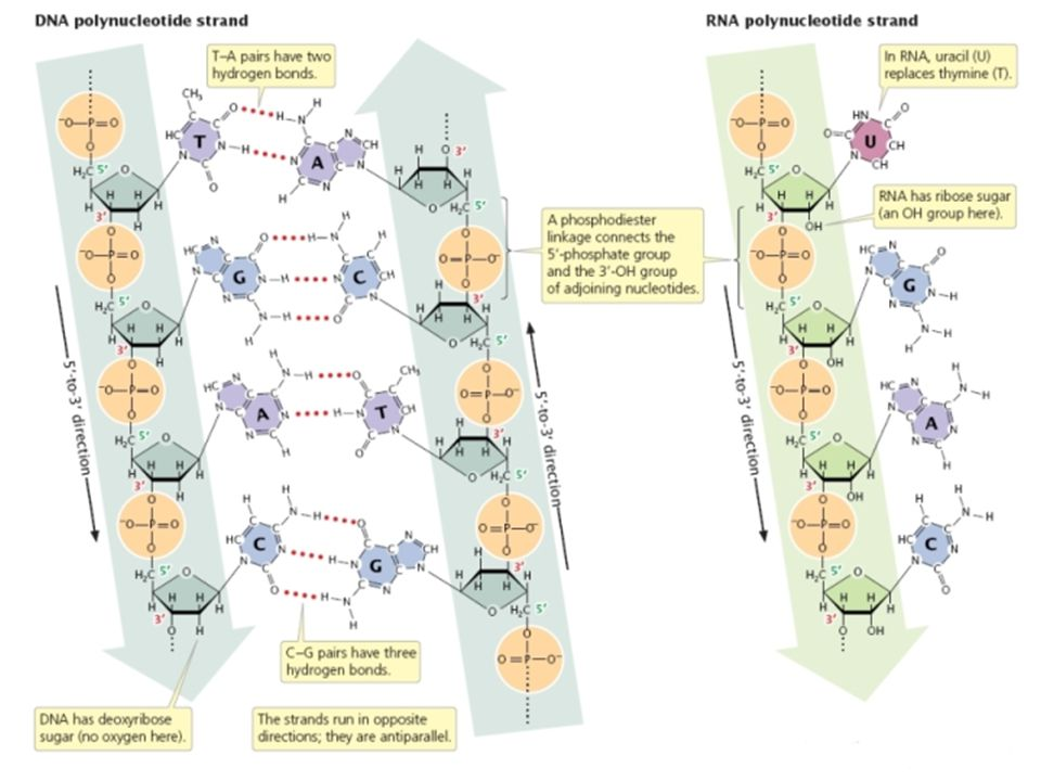 An Introduction to Molecular Biology