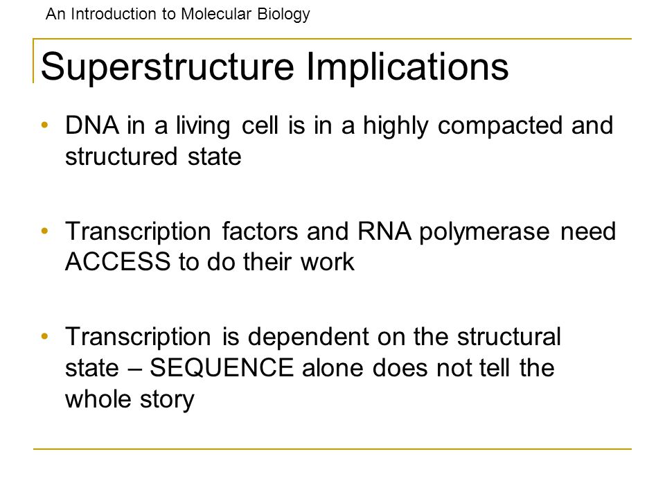 An Introduction to Molecular Biology Superstructure Implications DNA in a living cell is in a highly compacted and structured state Transcription fact