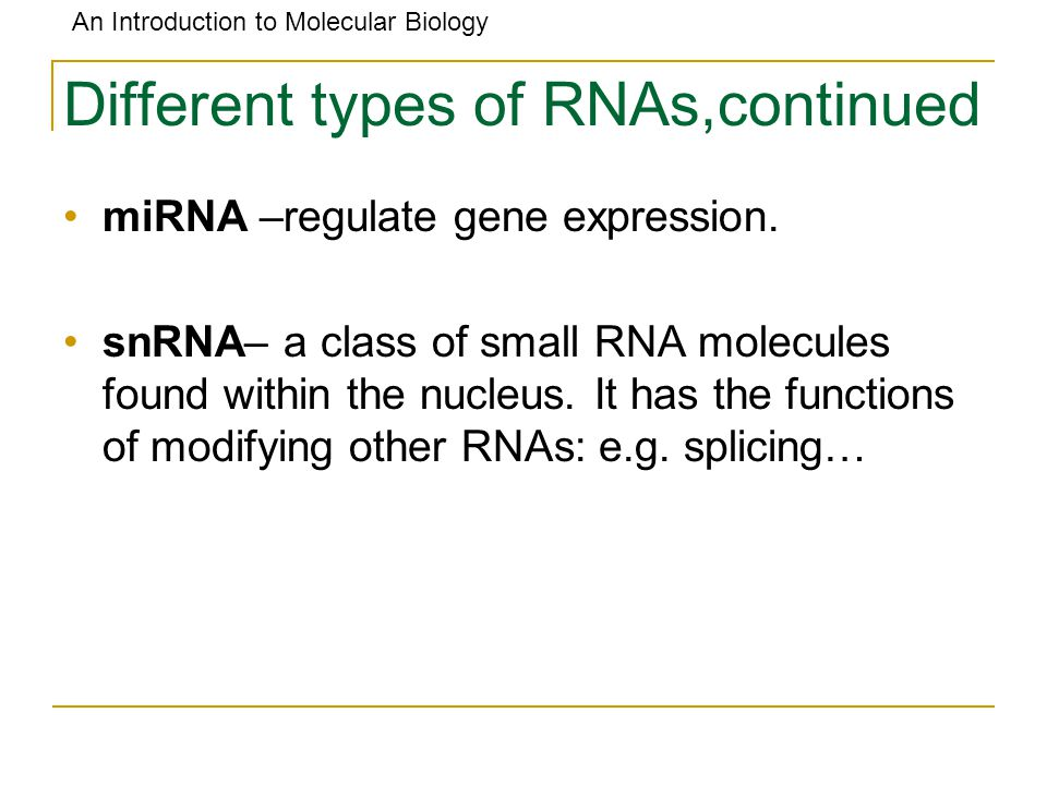An Introduction to Molecular Biology Different types of RNAs,continued miRNA –regulate gene expression. snRNA– a class of small RNA molecules found wi