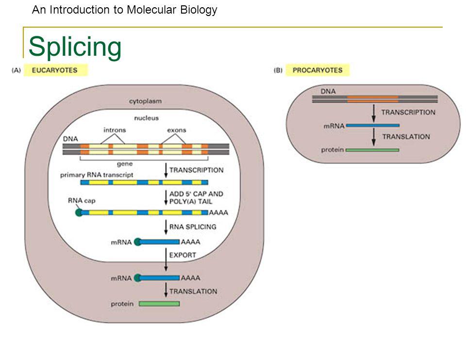 An Introduction to Molecular Biology Splicing