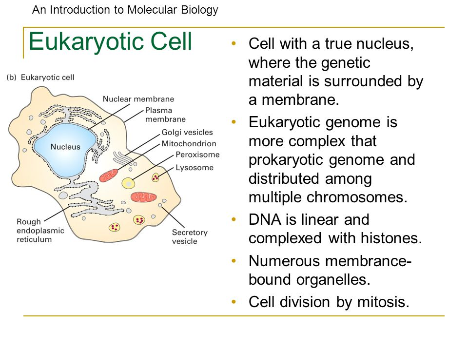 An Introduction to Molecular Biology All Cells have common Cycles