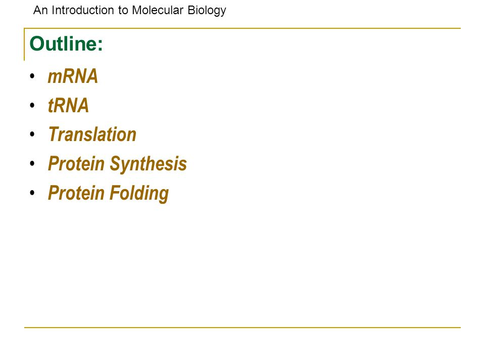 An Introduction to Molecular Biology Outline: mRNA tRNA Translation Protein Synthesis Protein Folding