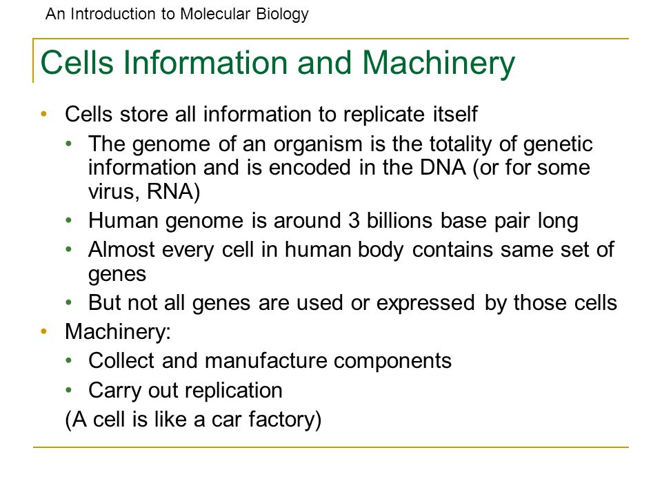 An Introduction to Molecular Biology Outline: Discovery of the Structure of DNA Watson and Crick DNA Basics