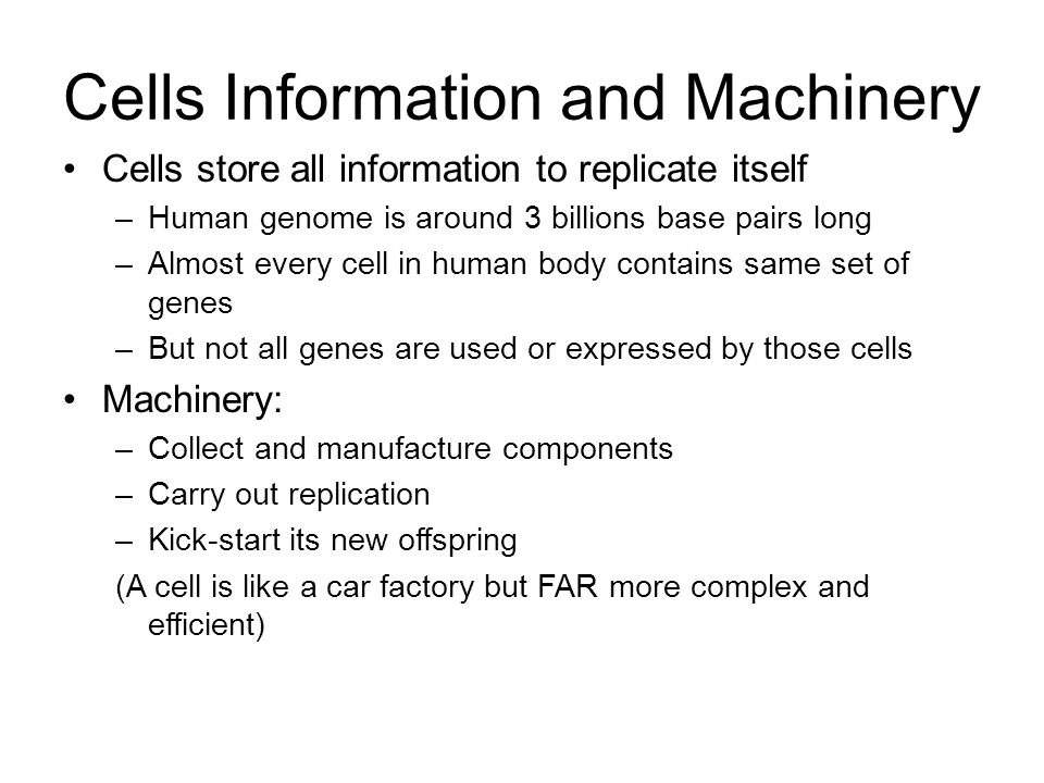 Cells Information and Machinery Cells store all information to replicate itself –Human genome is around 3 billions base pairs long –Almost every cell