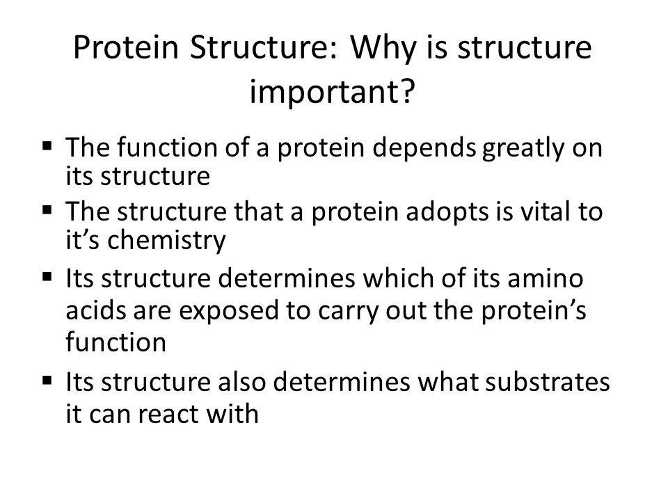 Protein Structure: Why is structure important? The function of a protein depends greatly on its structure The structure that a protein adopts is vital