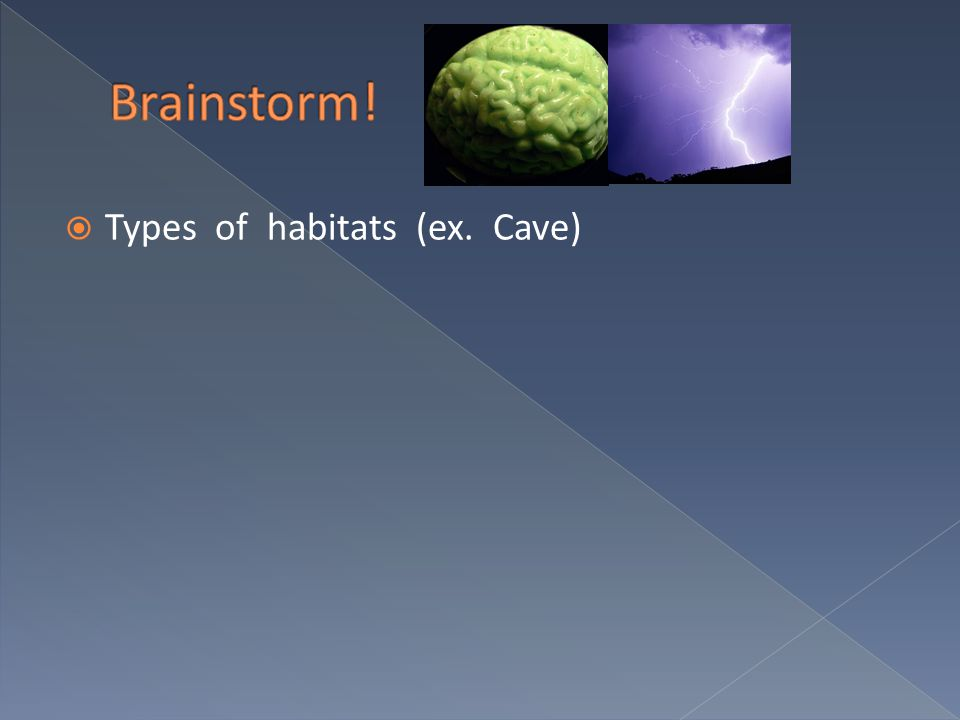 Types of Ecosystems (ex. Forest)