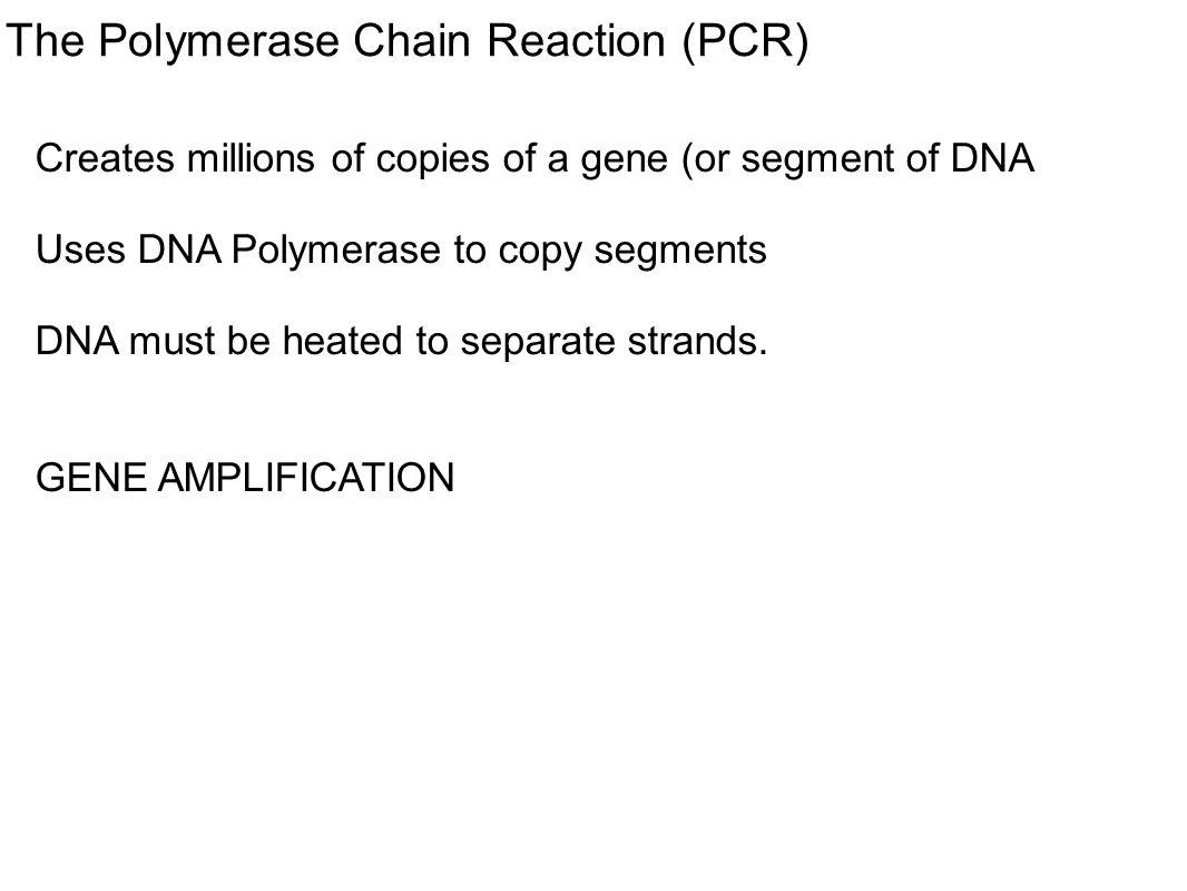 The Polymerase Chain Reaction (PCR) Creates millions of copies of a gene (or segment of DNA Uses DNA Polymerase to copy segments DNA must be heated to