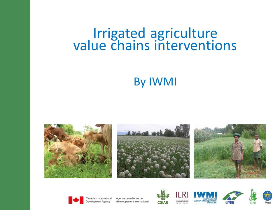 Minimum of 30 font size and maximum of 3 lines title By IWMI Irrigated agriculture value chains interventions