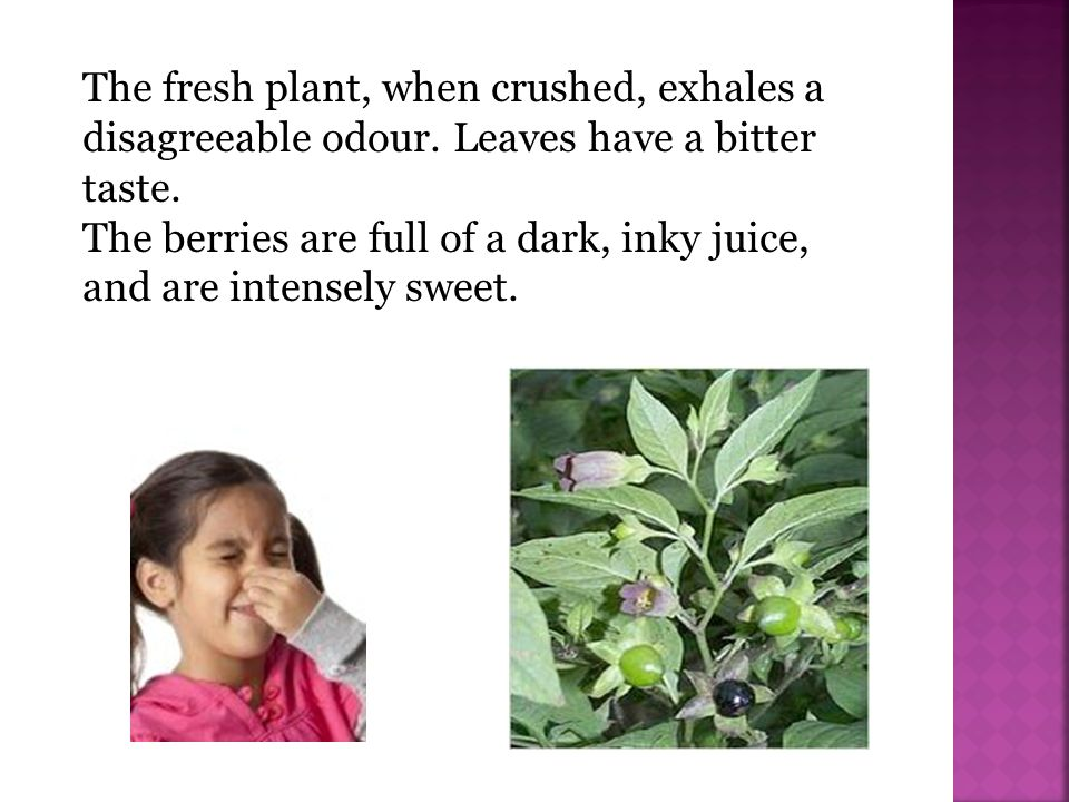 Every part of the plant is extremely poisonous.The root is the most poisonous.