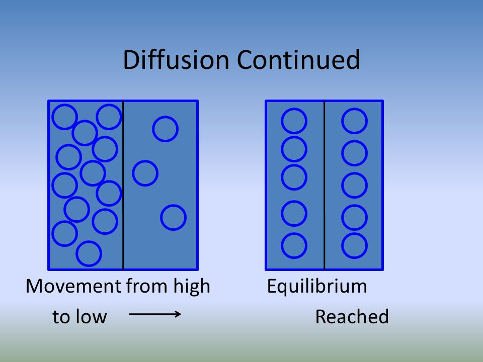 Diffusion Continued Movement from highEquilibrium to lowReached