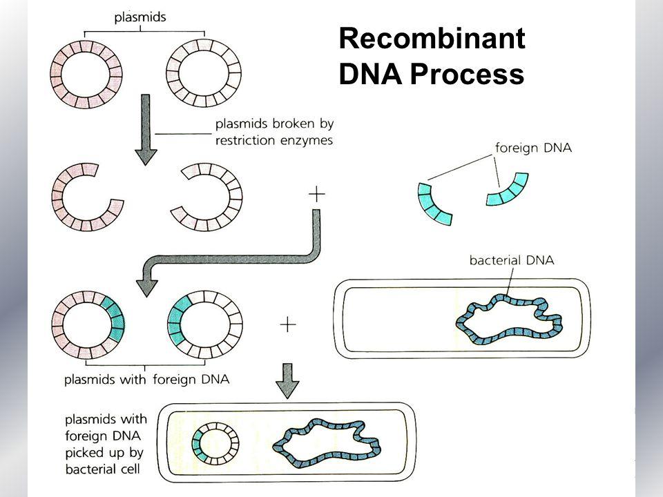 Recombinant DNA Process