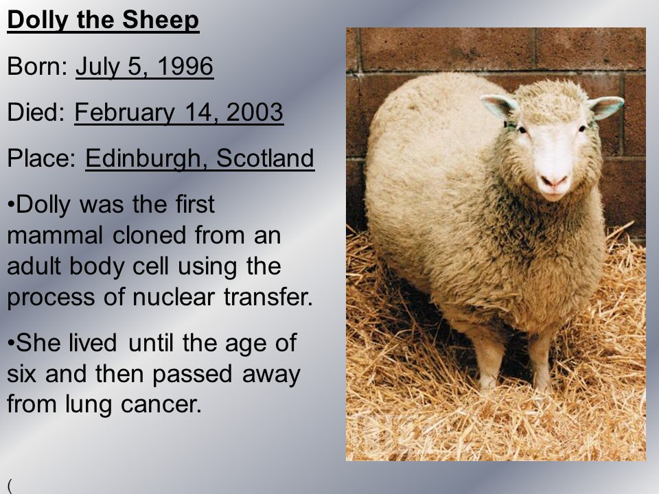 Dolly the Sheep Born: July 5, 1996 Died: February 14, 2003 Place: Edinburgh, Scotland Dolly was the first mammal cloned from an adult body cell using
