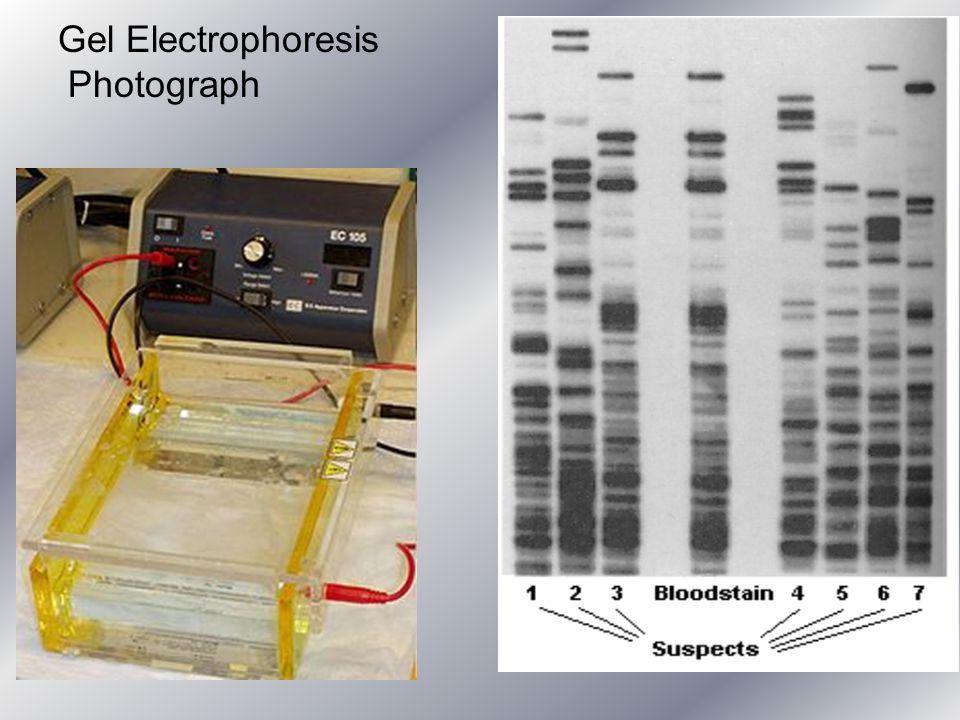 Gel Electrophoresis Photograph
