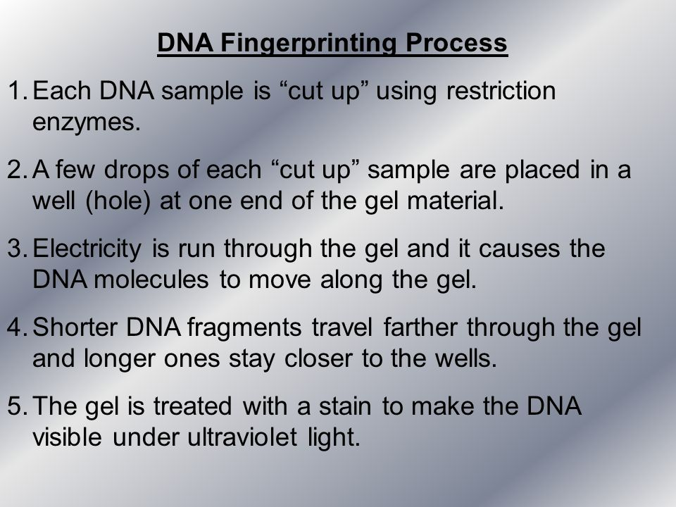 DNA Fingerprinting Process 1.Each DNA sample is cut up using restriction enzymes. 2.A few drops of each cut up sample are placed in a well (hole) at o