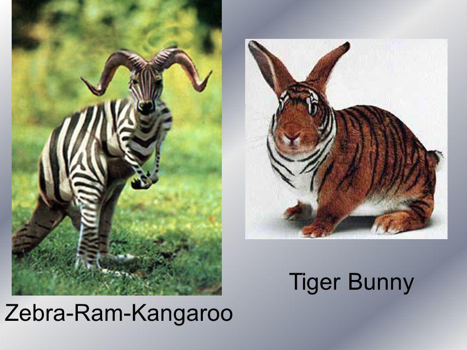 Tiger Bunny Zebra-Ram-Kangaroo