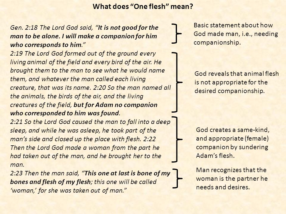 What does One flesh mean? Gen. 2:18 The Lord God said, It is not good for the man to be alone. I will make a companion for him who corresponds to him.