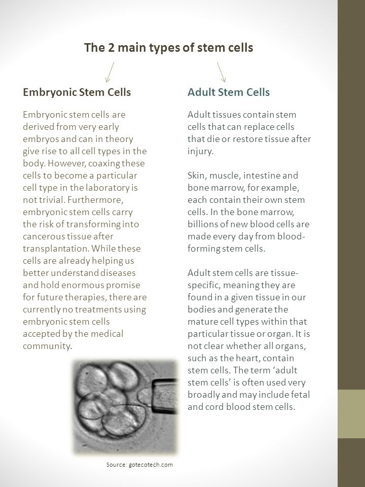 The 2 main types of stem cells Embryonic stem cells are derived from very early embryos and can in theory give rise to all cell types in the body. How