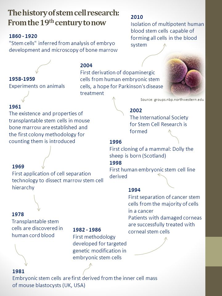 history of stem cell research American life league has amassed thousands of documents and articles on the full spectrum of life issues we are also actively creating and promoting new media resources, bringing essential knowledge of the pro-life movement to a new generation.