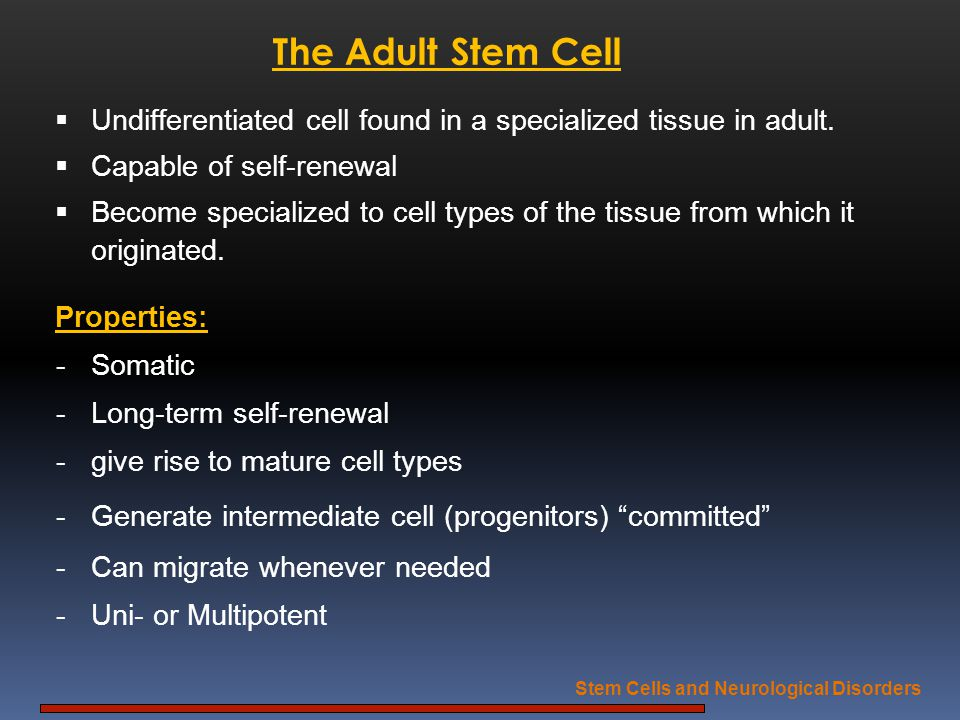 The Adult Stem Cell Undifferentiated cell found in a specialized tissue in adult. Capable of self-renewal Become specialized to cell types of the tiss