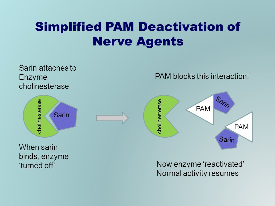 Sarin cholinesterase Sarin PAM Sarin PAM Simplified PAM Deactivation of Nerve Agents Sarin attaches to Enzyme cholinesterase When sarin binds, enzyme turned off PAM blocks this interaction: Now enzyme reactivated Normal activity resumes