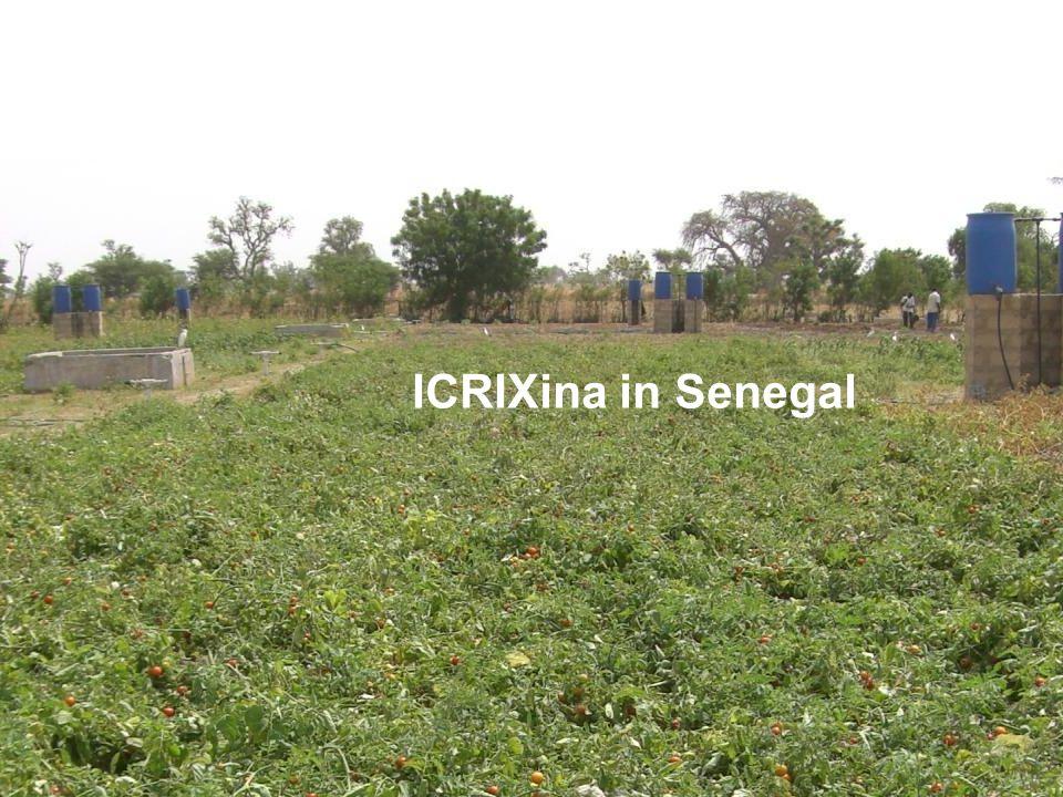 ICRIXina in Senegal