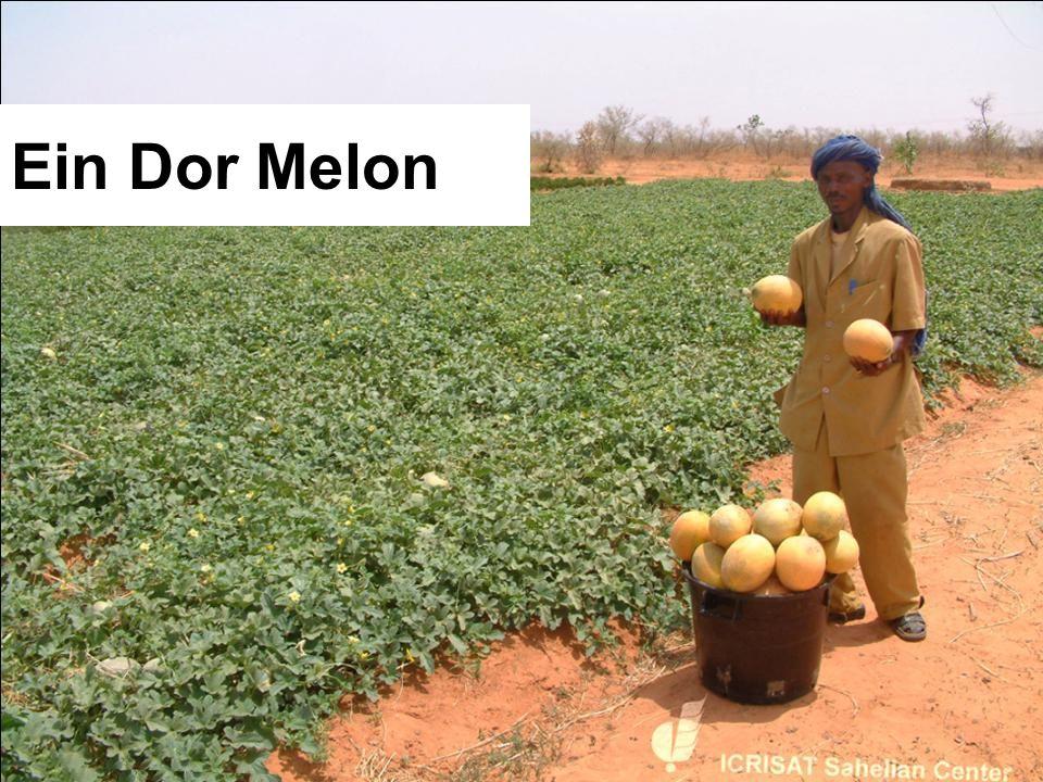 Ein Dor Melon