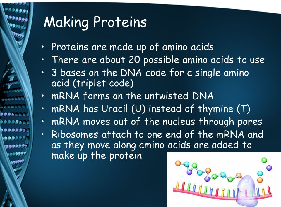 Making Proteins Proteins are made up of amino acids There are about 20 possible amino acids to use 3 bases on the DNA code for a single amino acid (tr