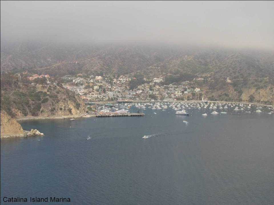 Catalina Island Marina