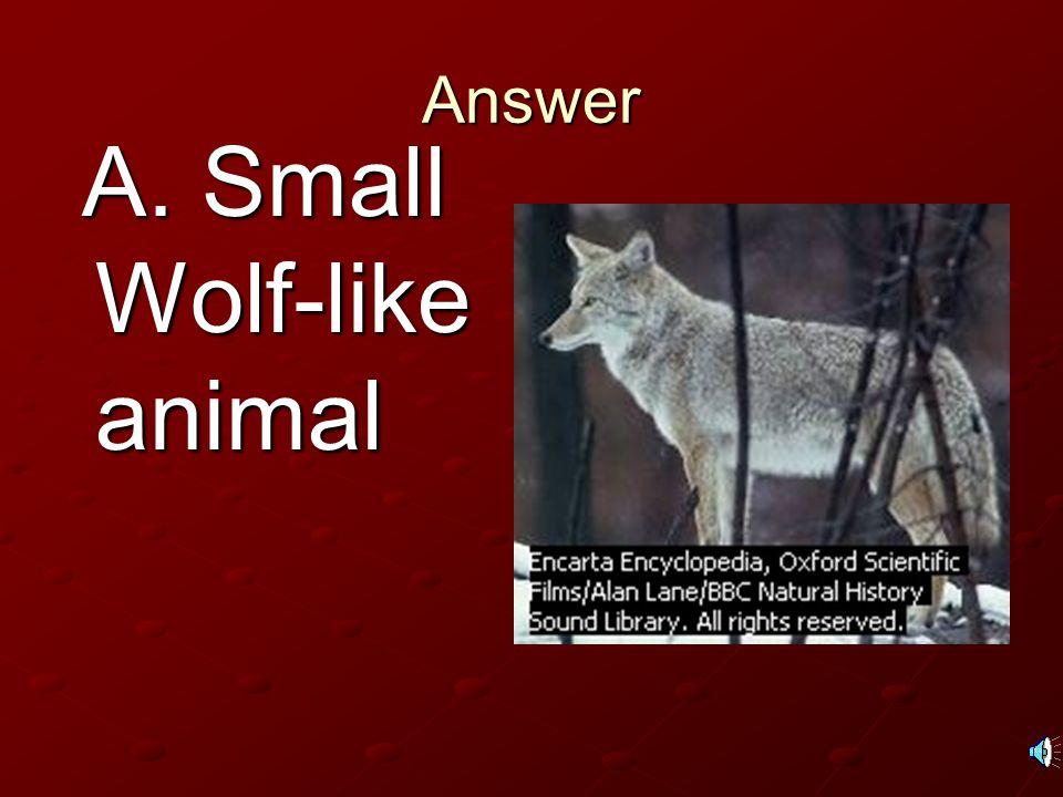Answer A. Small Wolf-like animal A. Small Wolf-like animal