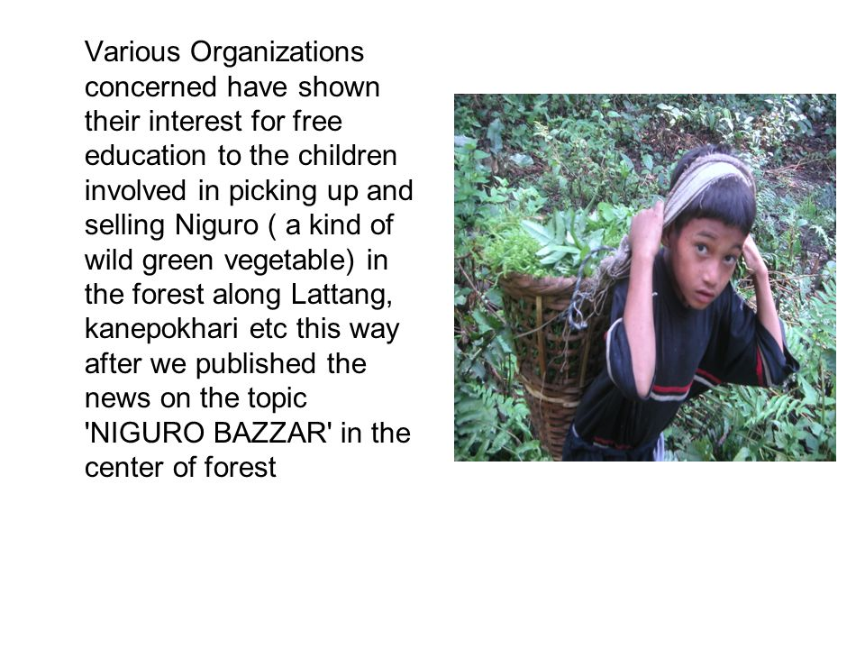Various Organizations concerned have shown their interest for free education to the children involved in picking up and selling Niguro ( a kind of wild green vegetable) in the forest along Lattang, kanepokhari etc this way after we published the news on the topic NIGURO BAZZAR in the center of forest