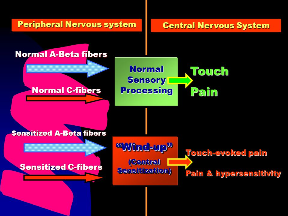 Peripheral Nervous system TouchPain Touch-evoked pain Pain & hypersensitivity Sensitized C-fibers Sensitized A-Beta fibers Wind-up (Central Sensitizat