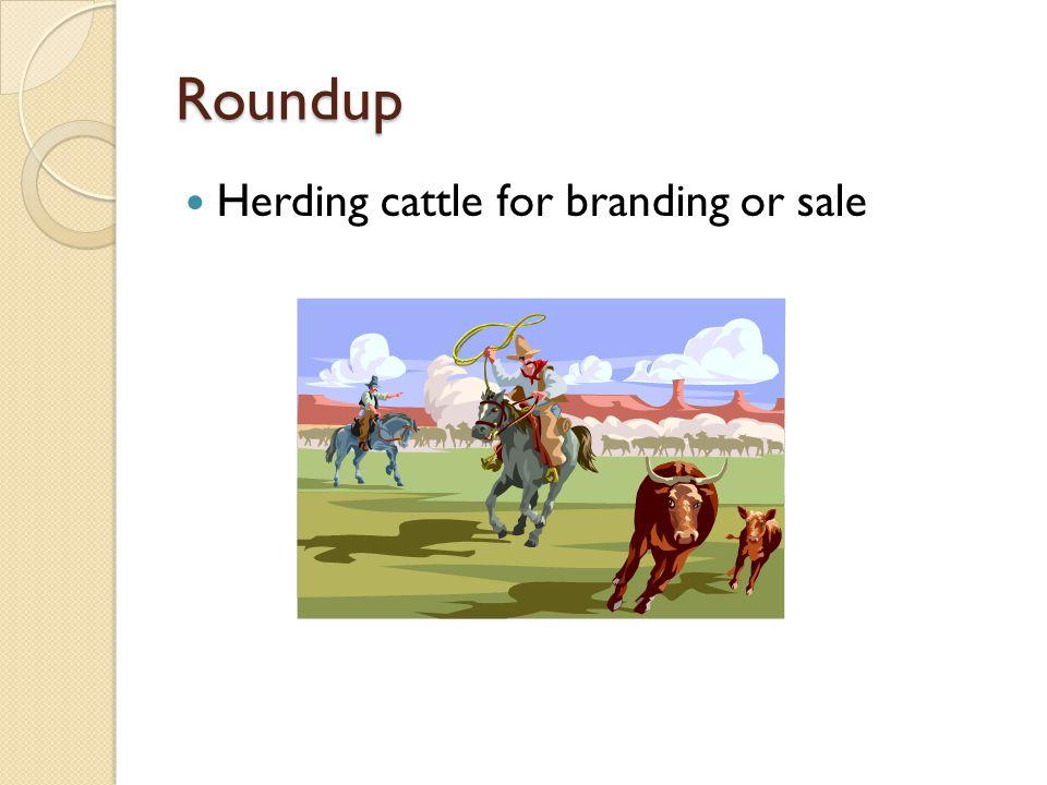 Roundup Herding cattle for branding or sale