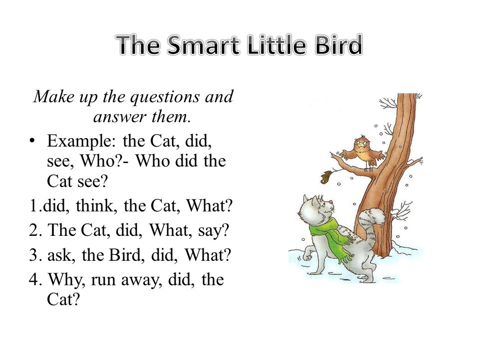 Make up the questions and answer them. Example: the Cat, did, see, Who - Who did the Cat see.