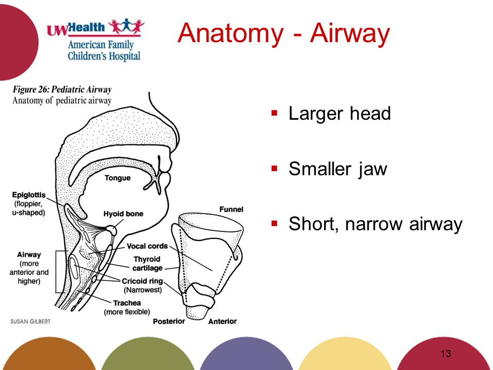 Anatomy - Airway Larger head Smaller jaw Short, narrow airway 13