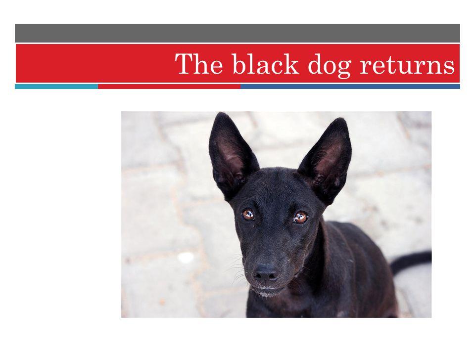 The black dog returns